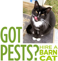 picture of a black and white cat caption says Got Pests? Hire a Barn Cat