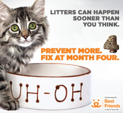 Photo of cat with food dish that says uh-oh