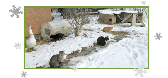 Picture of a feral cat colony in the snow.