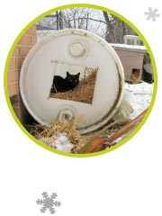 Picture of a cat in a barrel shelter with hay.